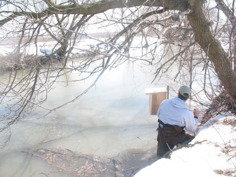 2008 Spring Woodduck Boxes